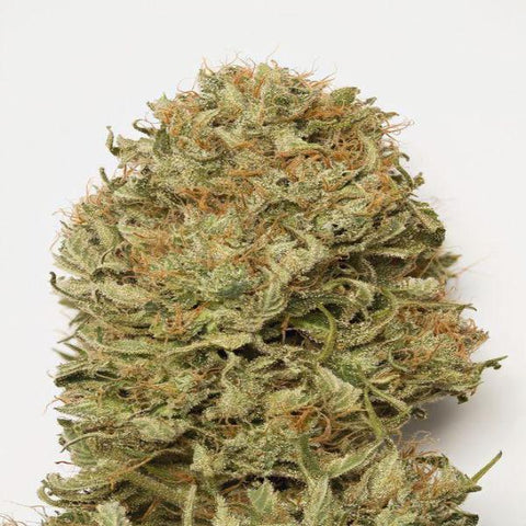 Humboldt Seeds - Blue Dream Auto - The JuicyJoint