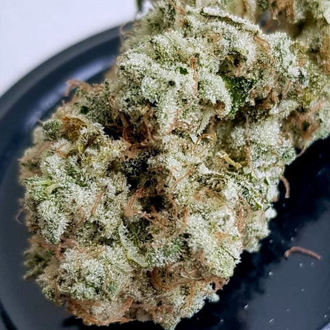 Lady Sativa Genetics - Ultra Glue
