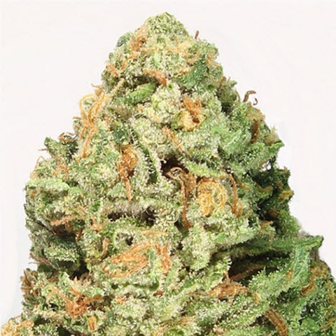 Heavyweight Seeds - Fruit Punch - The JuicyJoint