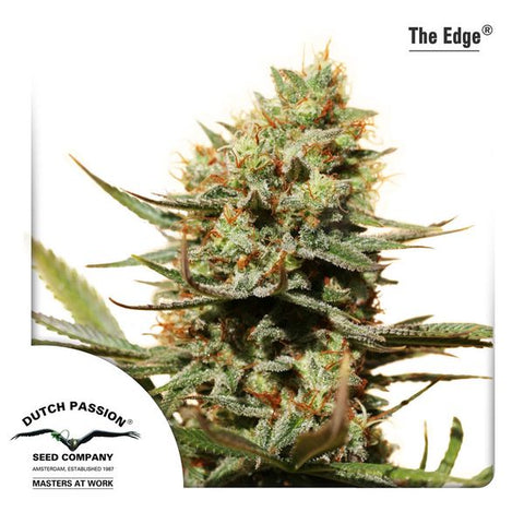 Dutch Passion - The Edge - The JuicyJoint