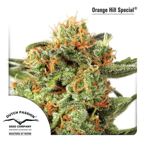 Dutch Passion - Orange Hill Special - The JuicyJoint