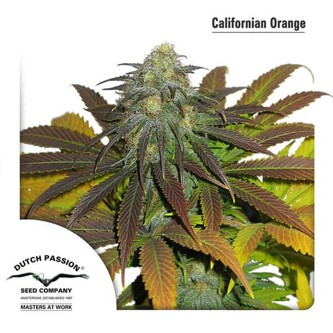 Dutch Passion - Californian Orange - The JuicyJoint