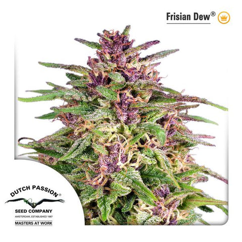 Dutch Passion - Frisian Dew - The JuicyJoint