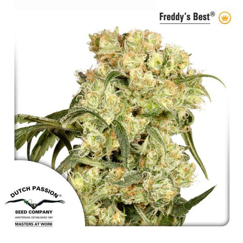 Dutch Passion - Freddy's Best - The JuicyJoint
