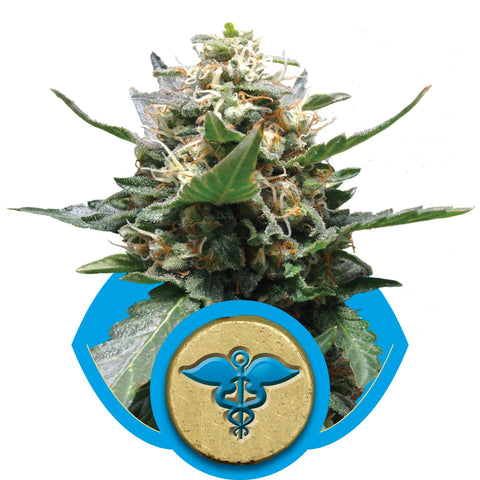 Royal Queen Seeds - Royal Medic (CBD) - The JuicyJoint