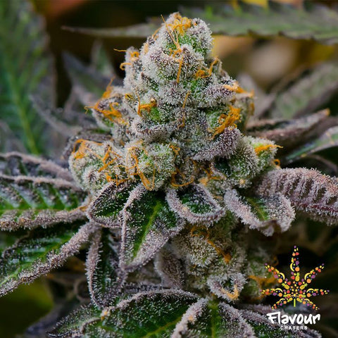 Flavour Chasers Seeds - Cookie Dough