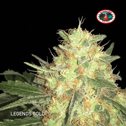 Big Buddha Seeds - Legends Gold - The JuicyJoint