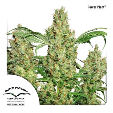 Dutch Passion - Powerplant - The JuicyJoint