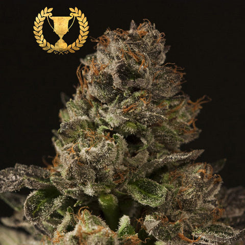 Devils Harvest Seeds -  Strawberry Sour Diesel - The JuicyJoint
