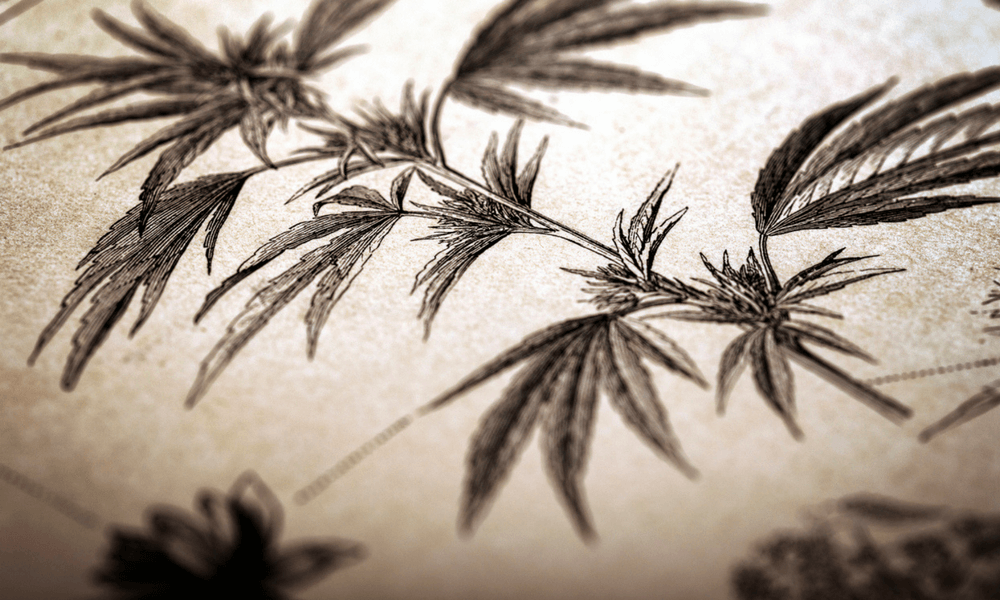 A Short History of Hemp