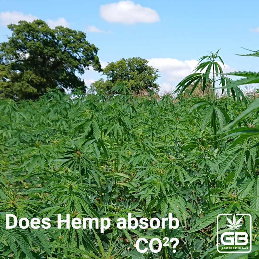 Does Hemp Absorb CO2?