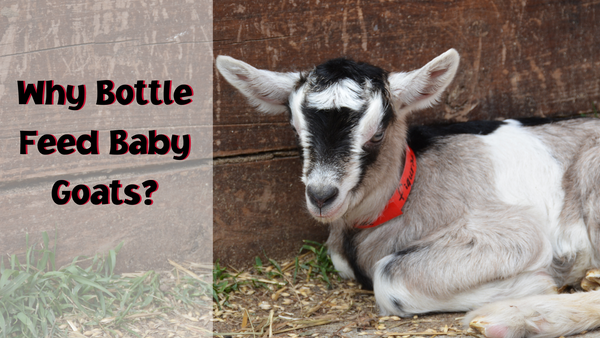 why bottle feed baby goats