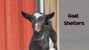 Goat Shelters