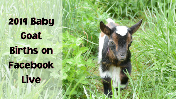 2019 baby goat births on facebook live