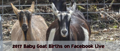 2017 Baby Goat Births on Facebook Live