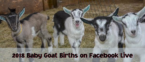 2018 Baby Goat Births on Facebook Live