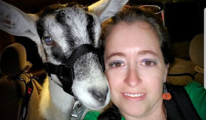 therapy goat