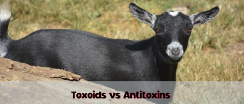 Toxoids vs antitoxins