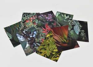 California Plants Postcard Pack-- 9 Luxe Matte Paper Postcards with 9 Kraft Paper Envelopes