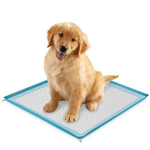 Select Companion Puppy Pee Pads with Scent Remover, 23 by 22 Inches - Pack of 100