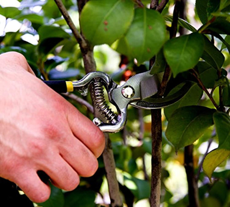 "Planted Perfect Planted Perfect Pruning Shears 8"" Hardened Steel Gardening Hand Pruners"