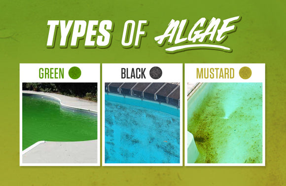 Algae Control, Water Clarity and Stain Removal