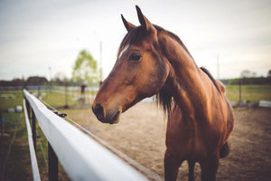 How to Find the Balance between Forage and Feed for Your Horses while Avoiding Obesity