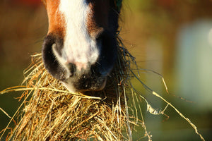 Feeding Horses During Reduced Work-