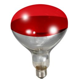 Heat Lamp Bulbs Red 250 Watt
