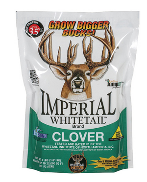 Whitetail Deer IMP Clover
