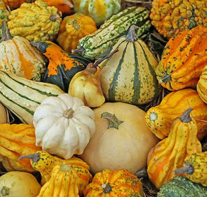 GOURD - AUTUMN WINGS SMALL