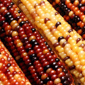 INDIAN FINGERS CORN
