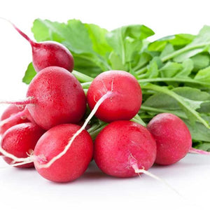 RADISH - FRENCH BREAKFAST