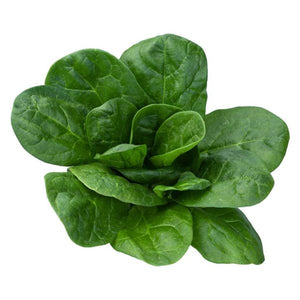 BLOOMSDALE LONGSTAND SPINACH