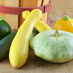 SQUASH - EARLY PROLIFIC STRAIGHTNECK