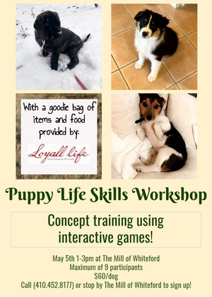 Puppy Life Skills Workshop at The Mill of Whiteford