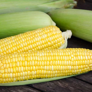 SERENDIPITY - TRIPLE BI-COLOR CORN