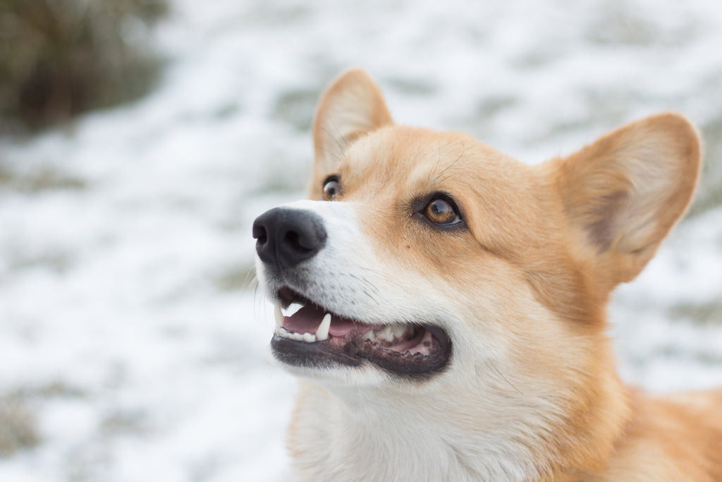 How to Protect Your Pet During the Winter