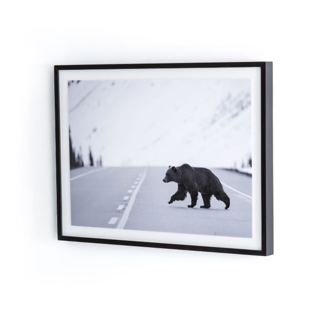 "Grizzly Bear-Photo,black Mpl 60""x40"""