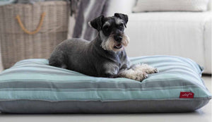 Wagworld Dog Bed: Wagworld - Futon - Interior. Available online from Yes.Pet