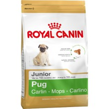Royal Canin Dog Food: Pug Junior (2 to 10 months). Available online from Yes.Pet