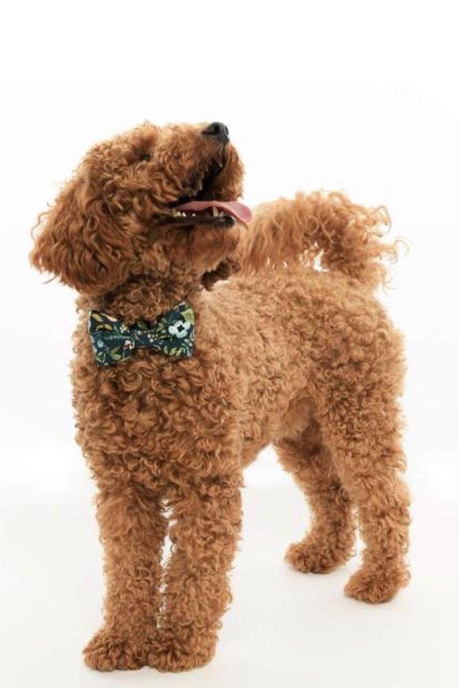 Herb Garden Dog Bow Tie-Large