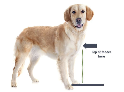 Measure dog from ground to middle of chest