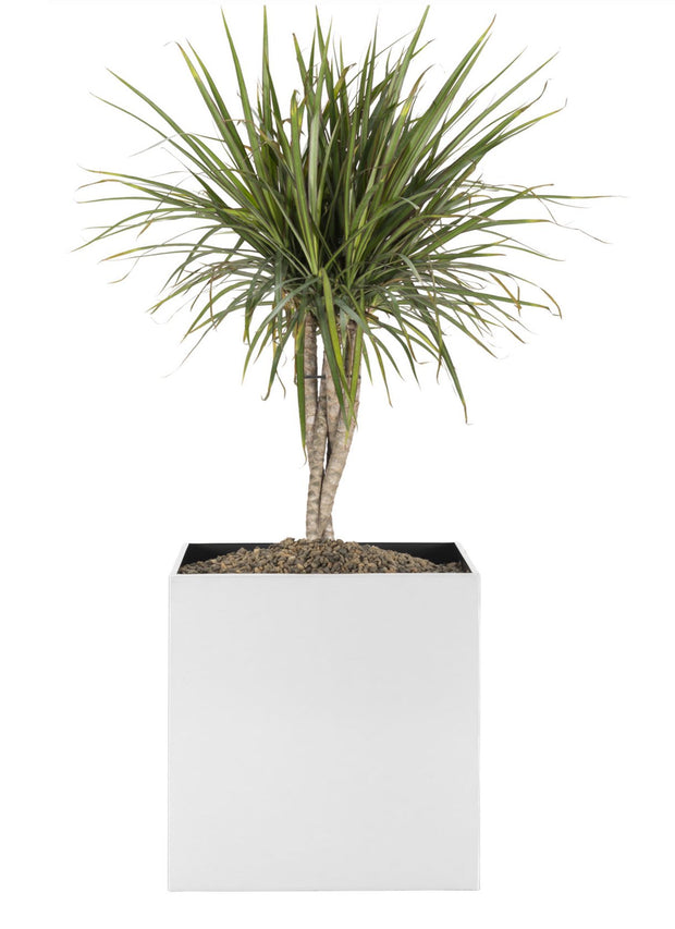 NMN Designs - Madeira Cube Planter - Brushed Metal Finish - Indoor, Outdoor Modern Square Planter