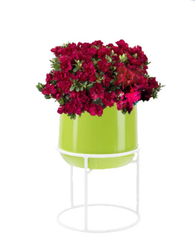 Ainslie green planter with stand and red flowers NMN Designs