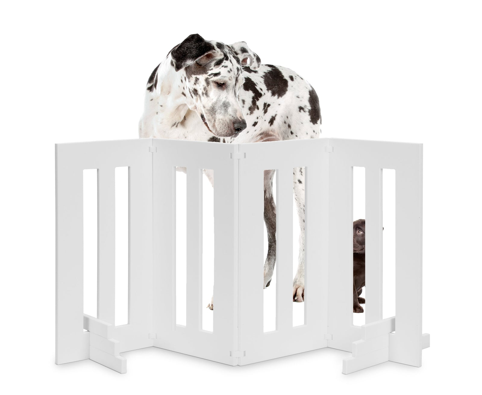 Backyard Outdoor Dog Gate