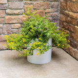 Knox Cylinder Planter - White