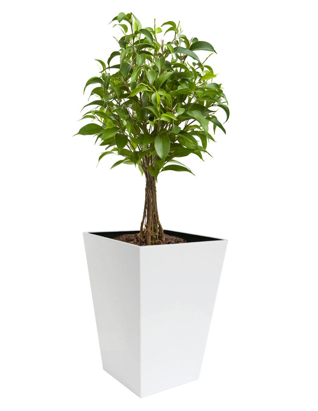 NMN Designs | Madeira Conica Planter in White Stainless Steel