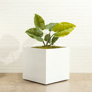 Seeley Cube Planter