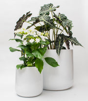 Ainslie Fiberglass Planter by NMN Designs - Glossy White, Round Planter Pot Container, Modern Indoor and Outdoor Planter